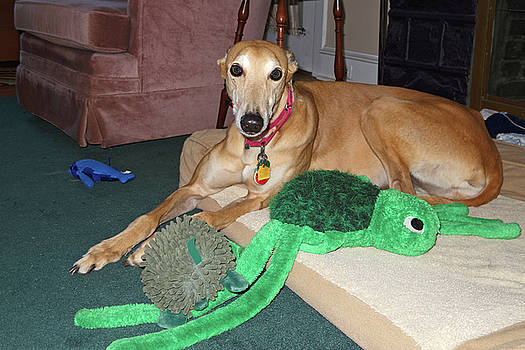 Greyhound and Toys by Sally Weigand