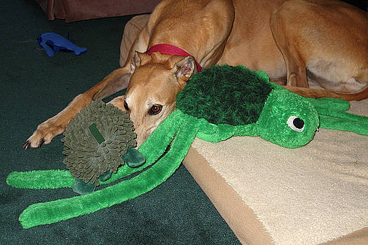 Greyhound Nuzzling Toys by Sally Weigand