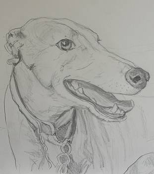 Greyhound on Grey Paper by Ruth Mabee