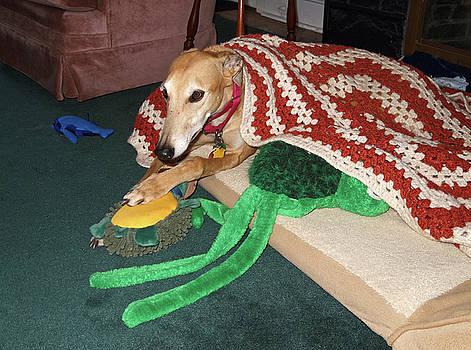 Greyhound With Blanket by Sally Weigand