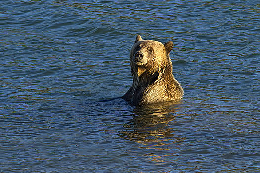 Grizzly Boar Lake by Bill Keeting