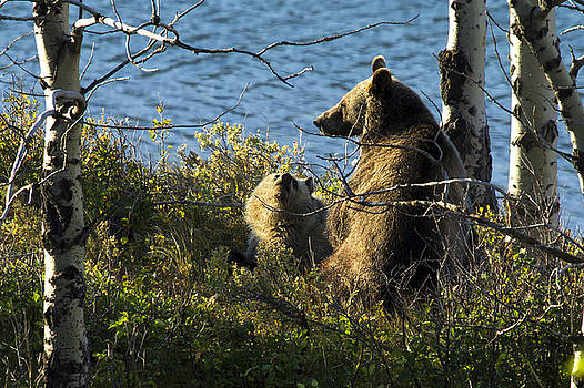 Grizzly Mom and Baby Silver by Bill Keeting