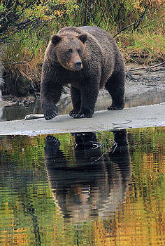 Grizzly Reflection by David Marr