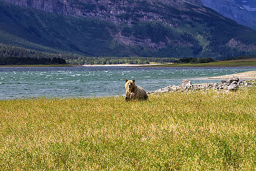 Grizzly Silver by Bill Keeting