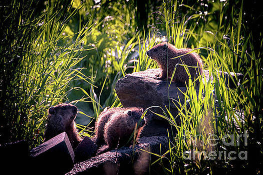 Groundhog Family by Sherman Perry
