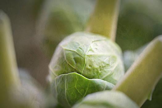 Grumpy Brussel Sprout by Robert FERD Frank