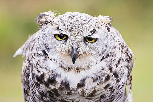 Grumpy Face by Windy Corduroy