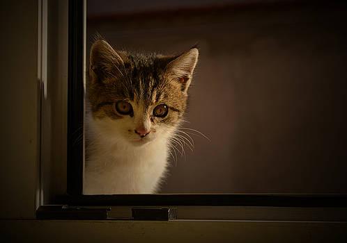 Guest on the window by Rumiana Nikolova