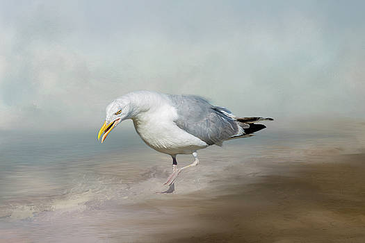 Gull 3831 by Cathy Kovarik