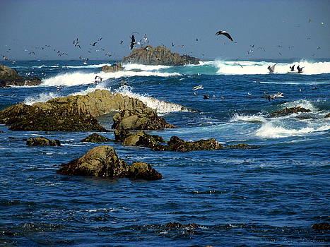Joyce Dickens - Gull And Pelican Feeding Frenzy Two