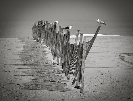Gull Fence by Andy Smetzer
