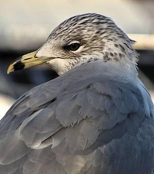 Gull by Jennifer Wheatley Wolf