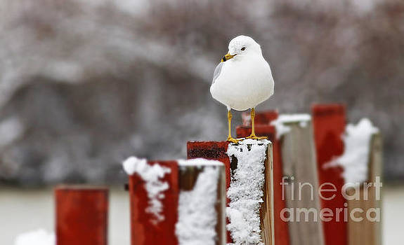 Gull on Post by Debbie Parker