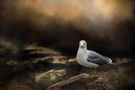 Gull On Rocks by Vicki McLead