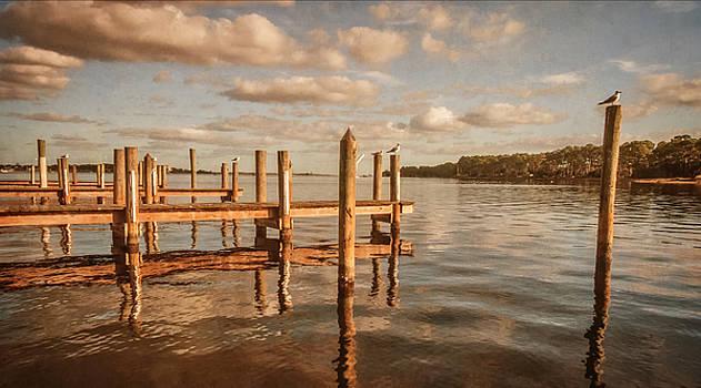 Gull Watching by Phillip Burrow