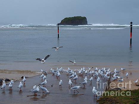 Gulls And Island by Trena Mara