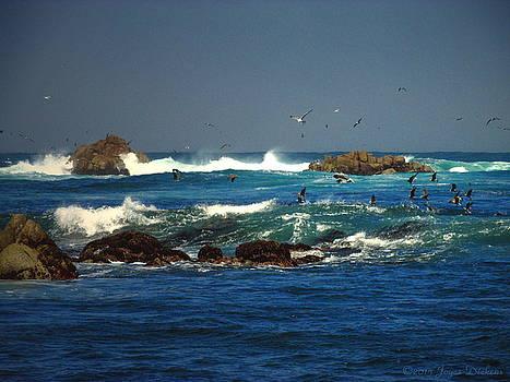 Joyce Dickens - Gulls And Pelicans Feeding Frenzy 01