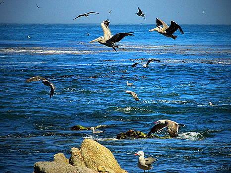 Joyce Dickens - Gulls And Pelicans Feeding Frenzy Three