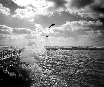 Gulls in a Gale by James Rasmusson