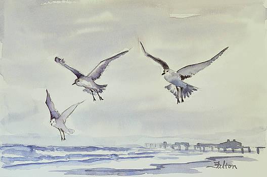 Gulls in the fog by Julianne Felton