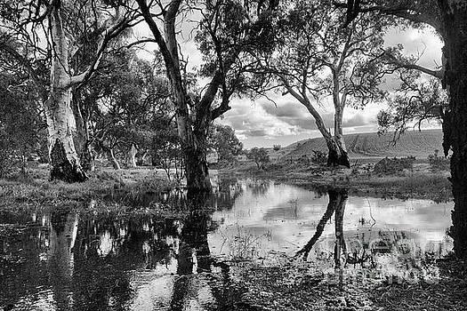 Gum Creek by Douglas Barnard