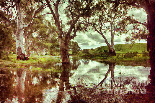 Gum Creek V2 by Douglas Barnard