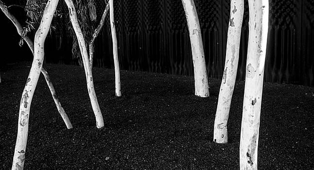 Steven Ralser - Gum Trees - Canberra - Australia