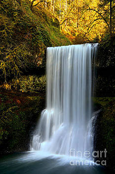 Adam Jewell - Gushing In The Oregon Rainforest