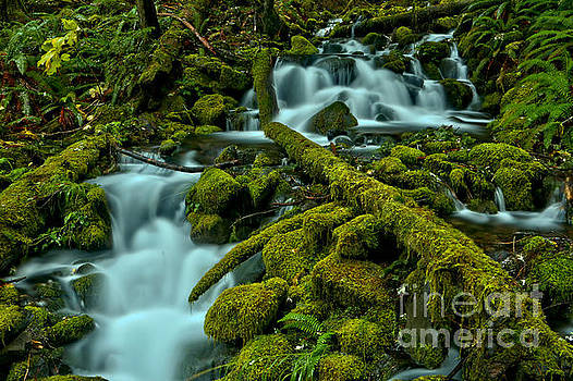Gushing Through The Moss Covered Rainforest by Adam Jewell