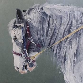 Gypsy cob mare-Milltown fair by Pauline Sharp