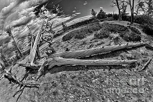 Hafe A Man Tree by Blake Richards