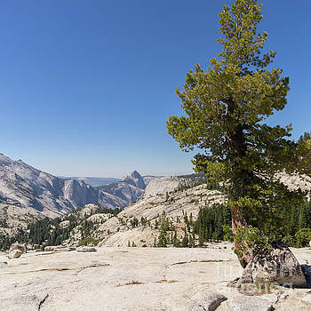 Wingsdomain Art and Photography - Half Dome and Yosemite Valley From Olmsted Point Tioga Pass Yosemite California dsc04274sq