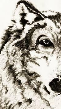 Pencil Drawing of Half Wolf Face by Ayasha Loya by Ayasha Loya