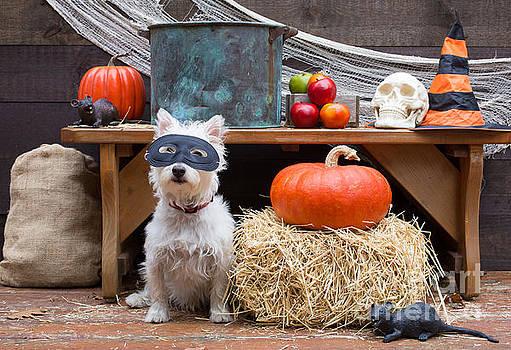 Edward Fielding - Halloween Party Dog
