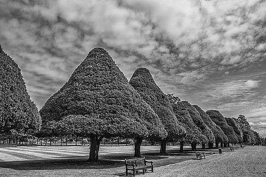 Hampton Palace Gardens by Elvira Butler