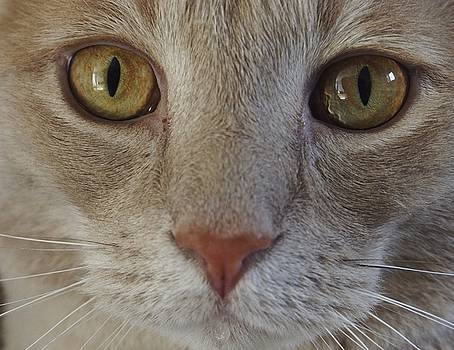 Handsome Cat Face by Patricia McKay