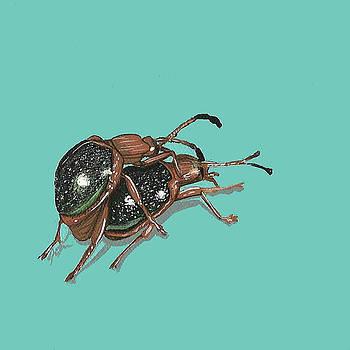 Handsome Fungus Beetles by Jude Labuszewski