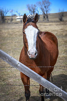 Handsome Horse by John Lee