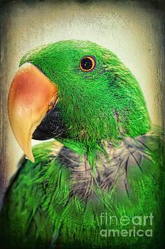 Handsome Parrot by Mariola Bitner