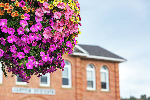 Hanging Basket with Colorful Flowers by Jess Kraft