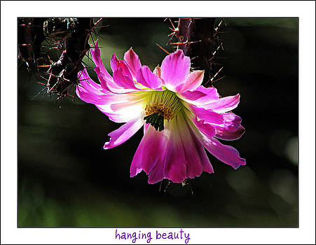 Hanging Beauty by Terry Temple