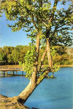 Barry Jones - Hanging On - Lakeside Landscape