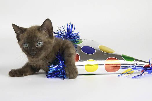 Happy Birthday Kitty by Shoal Hollingsworth