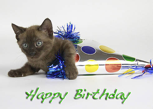 Happy Birthday by Shoal Hollingsworth