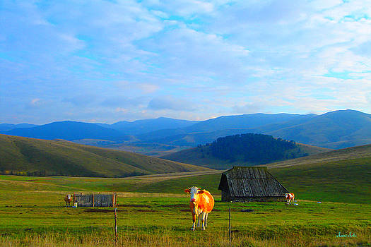 Happy Cow by Marko Mitic