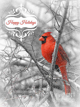 Happy Holidays Cardinal by Robert ONeil
