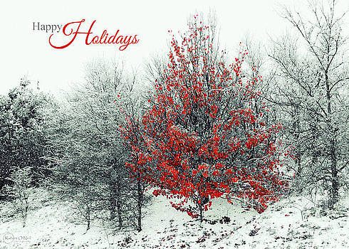 Happy Holidays by Robert ONeil