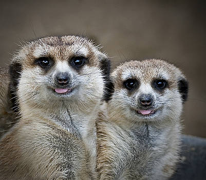 Happy Meerkats by Thanh Thuy Nguyen
