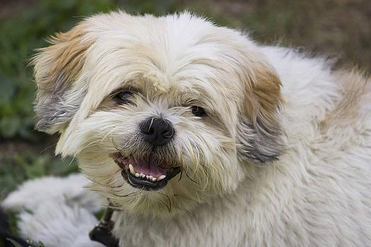 Happy Puppy by Mark Michel