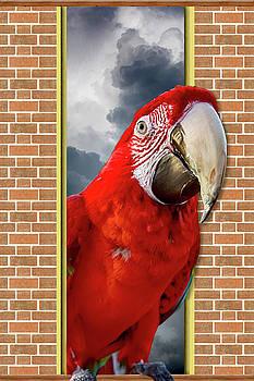 Happy Red Parrot by John Haldane